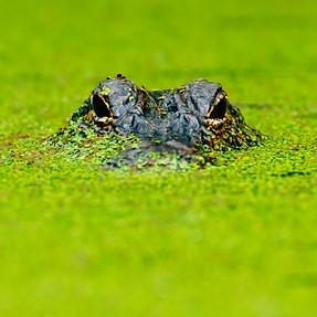 Southeast Texas Swamp Photography