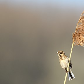 Some spring birds