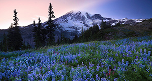 Feature Articles and Videos