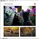 PhotoShelter introduces Pinterest-like photography curation service Lattice