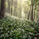£10K Landscape Photographer of the Year prize goes to woodland view