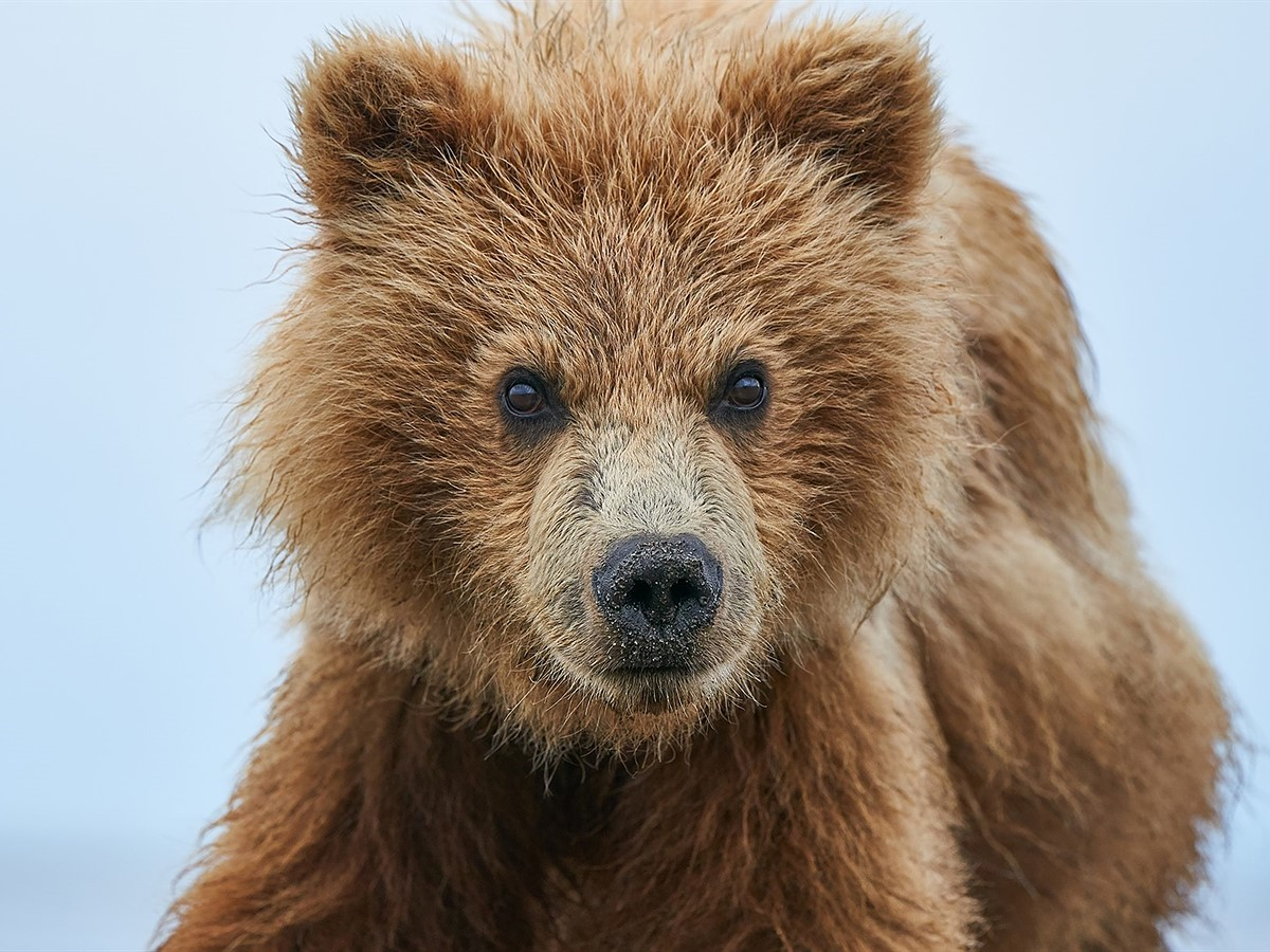 A wildlife photographer's perspective on the Sony a9