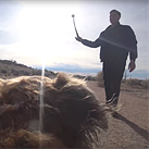 This video from an action cam strapped to a dog will make you laugh or make you sick, possibly both