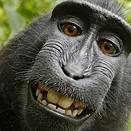 PETA is close to settling that ridiculous monkey selfie lawsuit