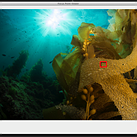 Open source Lightroom plugin Focus Point Viewer highlights active focus points