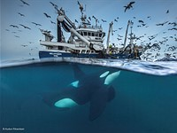 Take a peek at some of the contenders for Wildlife Photographer of the Year 2016