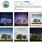 The Broccoli Tree and the dangers of sharing photos of the places you love online