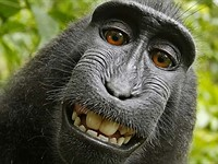 PETA and David Slater settle copyright lawsuit over monkey selfie