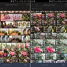 Raw workflow goes mobile: Hands-on with Adobe Lightroom for Android 2.0