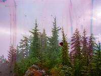 Film Fridays: 9 analog photography ideas for isolation