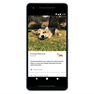 Google lens can now identify pet breeds, create pet photo books and compile pet movies