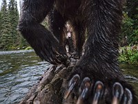 Behind the shot: A mother grizzly and her cub go salmon fishing