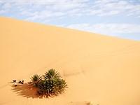 沙和天空:拍摄摩洛哥