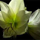 This flower bloom time-lapse took three years and 8TB of raw footage to create