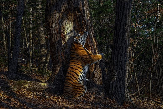 Slideshow: Winners of the 2020 Wildlife <a href=
