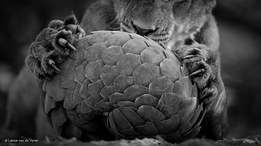 Take a peek at some of the contenders for Wildlife Photographer of the Year 2016 8