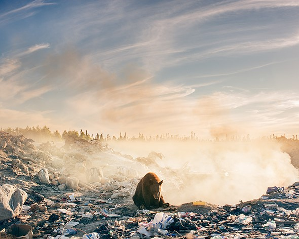 Photo of the week: A heartbreaking photo of a bear in a landfill 1