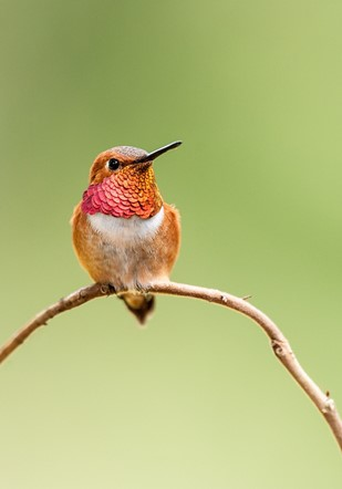 Readers' showcase: Nature and Wildlife