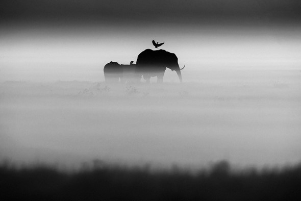 Out of Africa: The black and white nature photography of Laurent Baheux