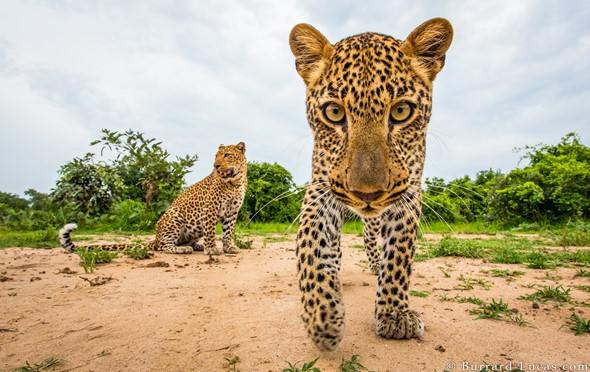 Will Burrard-Lucas' wildlife photography