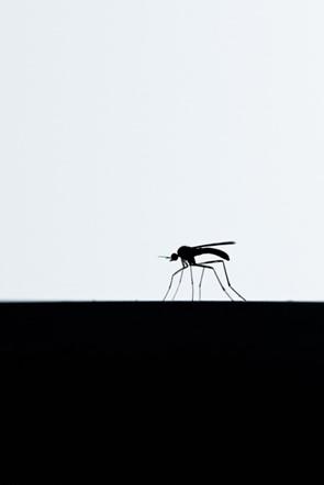 British Wildlife Photography Awards 2014 winners