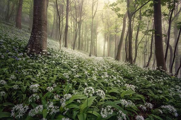 <strong>Overall LPOTY Winner: Chris Frost, 'Woolland Woods', Dorset</strong>