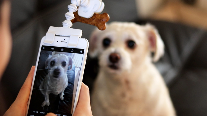 Flexy Paw treat holder phone clip tantalizes pets for better photos
