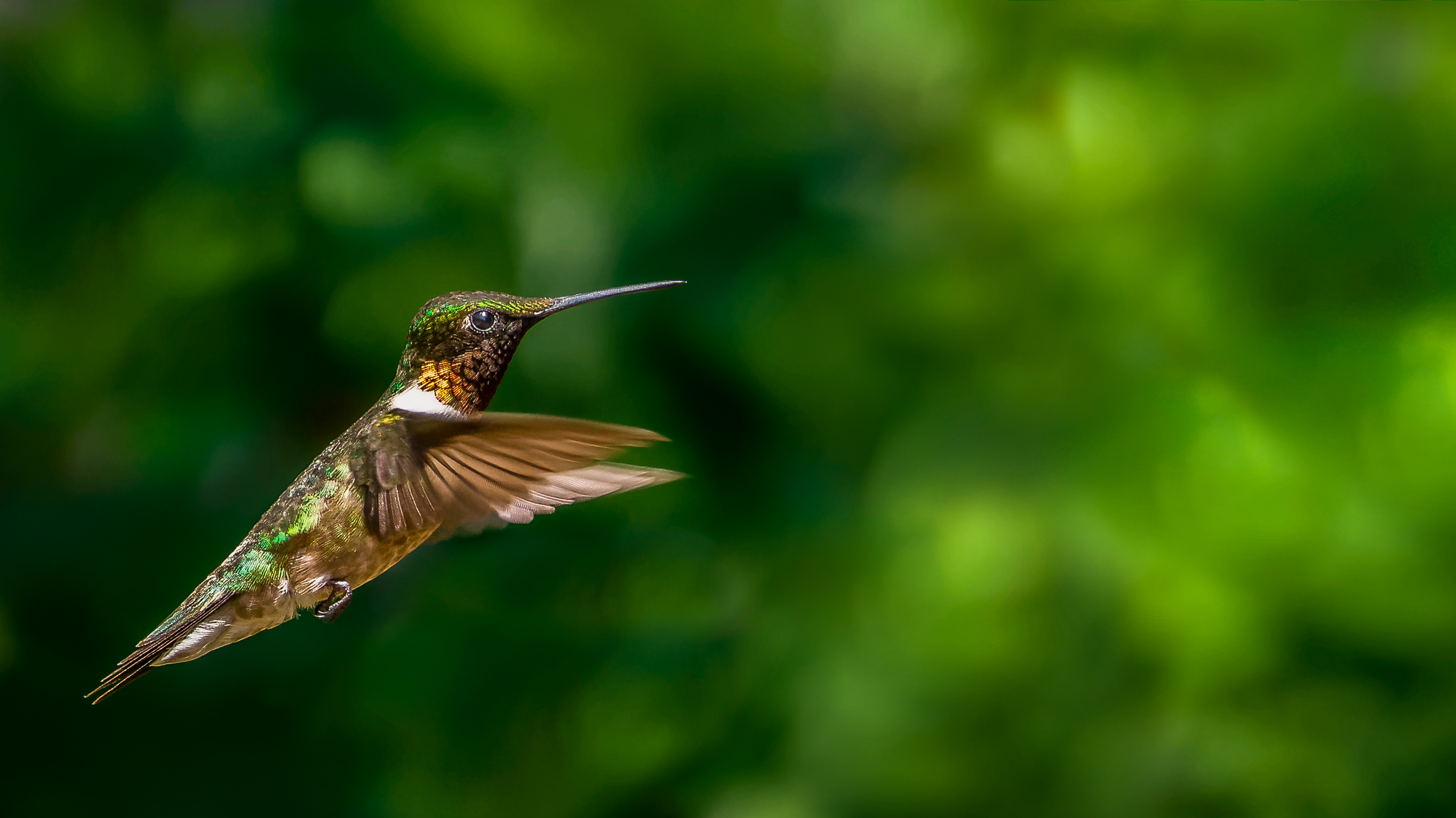 Re: Motion sensor trail camera for hummingbird photography