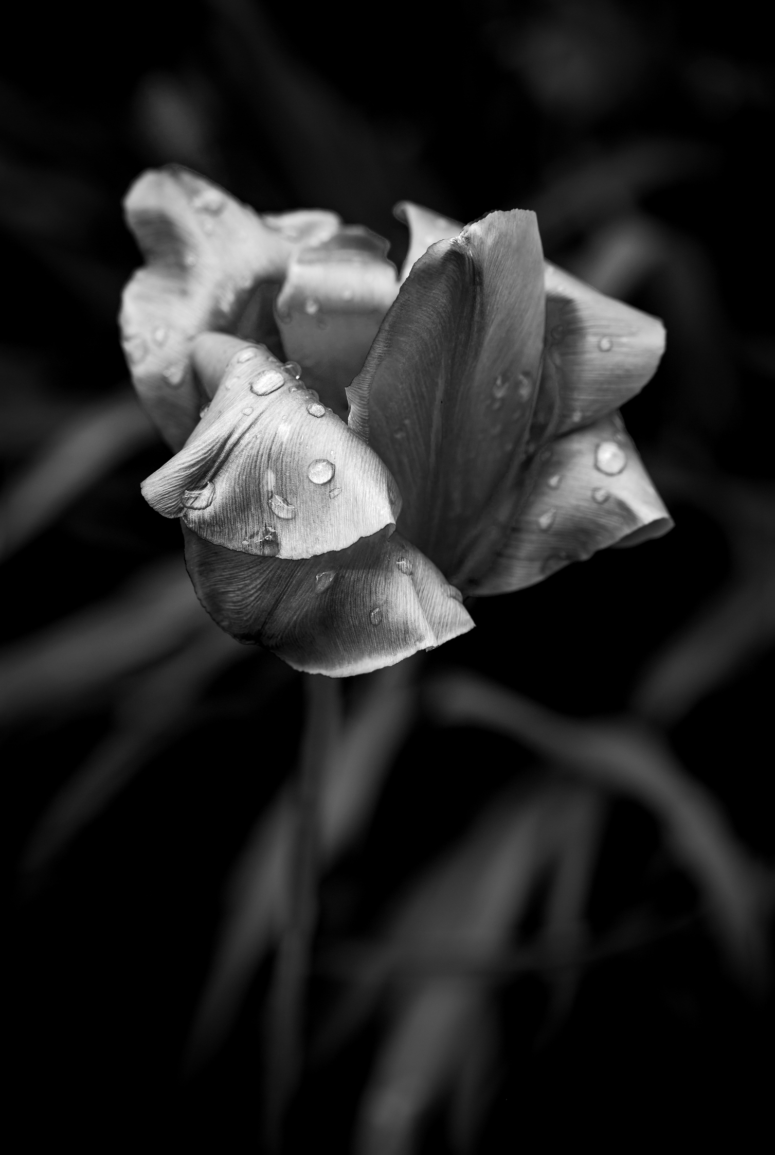 Single Flower Black And White Photography Forum Digital