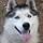 Loki the Dog