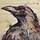Raucous Raven