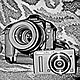 TheCollector