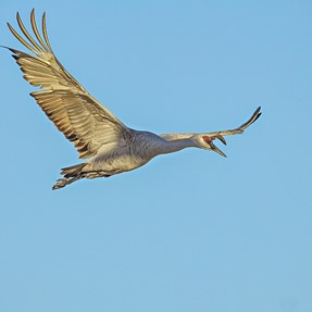 P900 and P610 Birds in Flight method