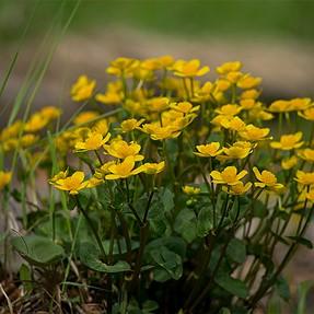 Flowers - Minolta 300mm f4 HS