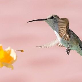 Hummingbird shot with D7200