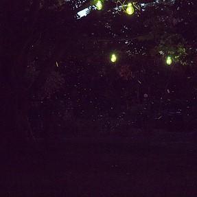 fireflies & star trails