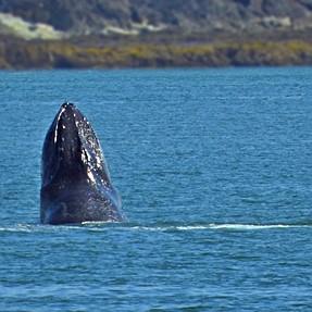Alaska  ..  Humpback Whales  and Glacier