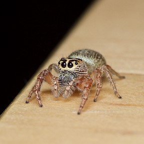 The eyebrow spider. :D