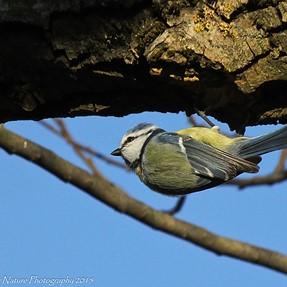 Fujifilm HS50EXR: More birding images