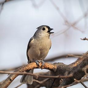 Feeder Birds and Squirrels