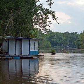 Louisiana/Mississippi Bayou and Gators