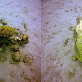 3D underwater - cross eyes