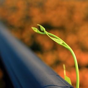 Garden Variety. SL1+ Canon EF S 35 macro