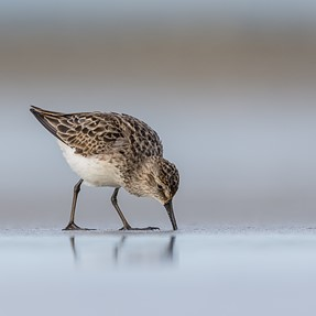 Shorebirds and others from both coasts
