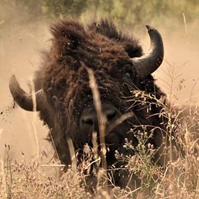 Nationl Bison Range