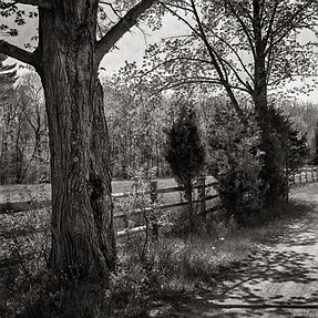 The Fence in Spring  medium format