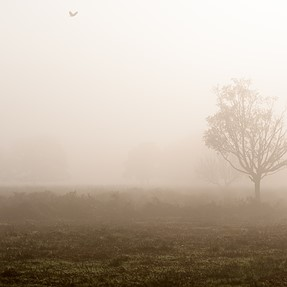 Misty Morning In Richmond Park