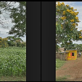 Some Crosseyed Video Stills of Africa