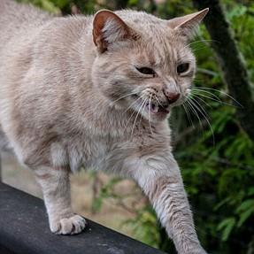 :-)) Sunday Cat! #548 April 15, 2018 ((-: