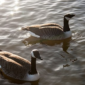 *istDL and 35-80 FA at the local duckpond